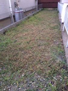 weeds_09196